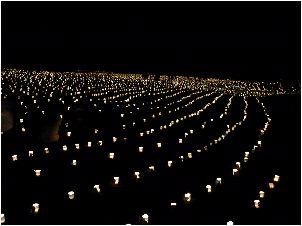 本庄:やわらかな夜:マリーゴールドの丘