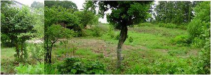 涸沼の北の森工房の敷地