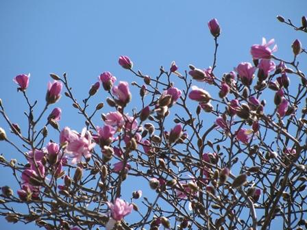 春が一気にやってきた!?