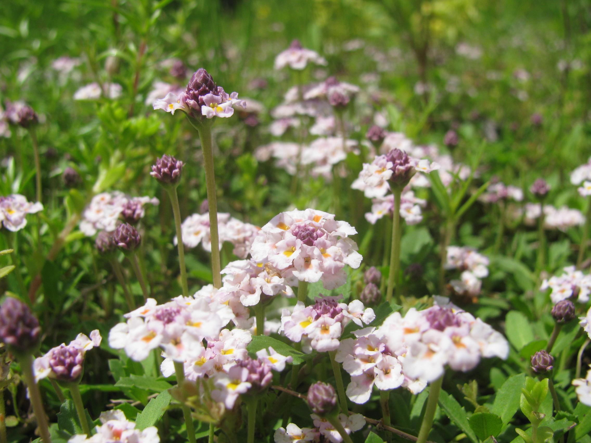 花は初夏の色に変わりました