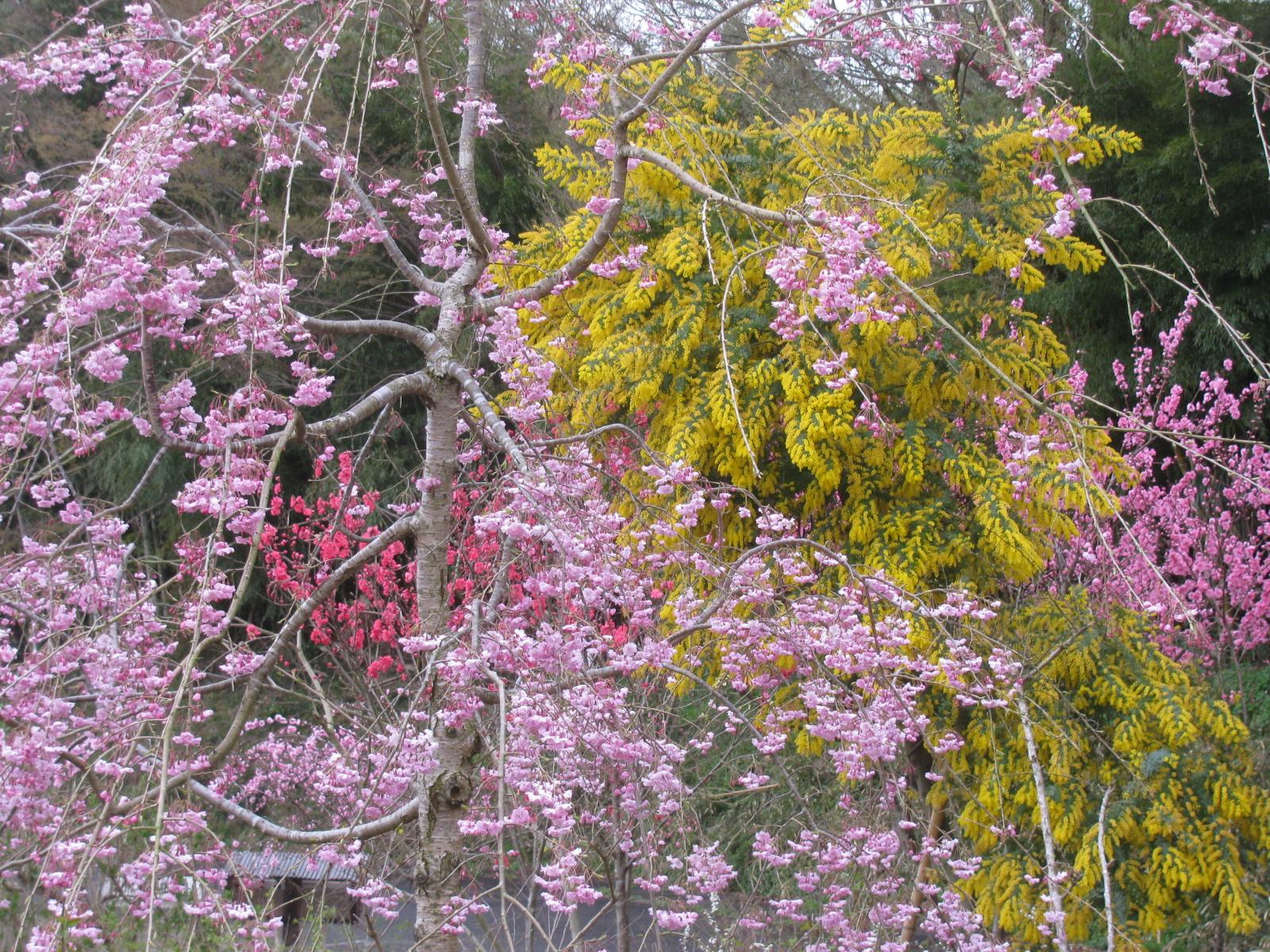 花の色が重なる、のんびりぼっこ広場