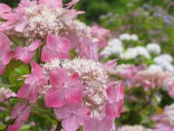 のんびりぼっこ広場のロゴ:花の庭