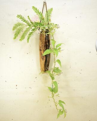 自然木の壁掛け一輪挿し